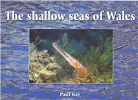 The Shallow Seas of Wales